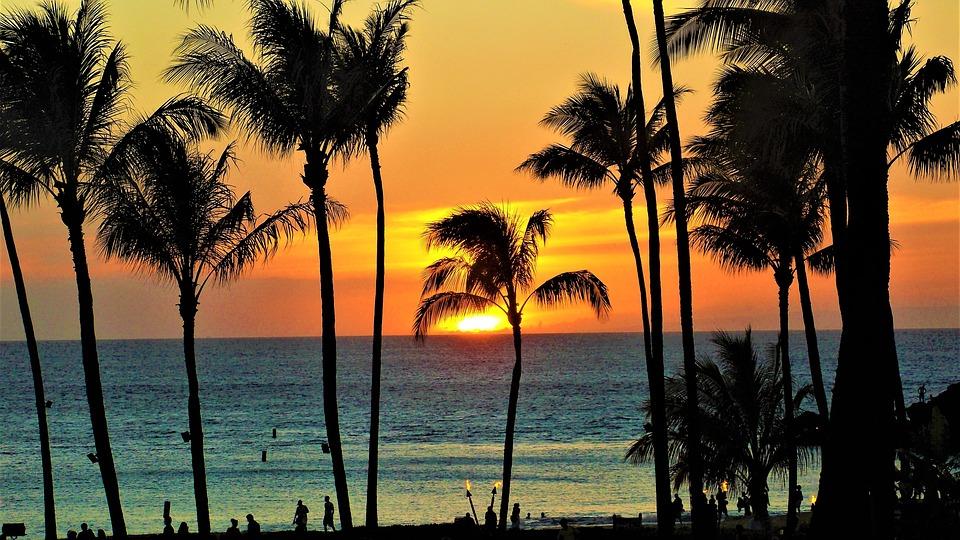 Hawaiian Rehabs, The Recover