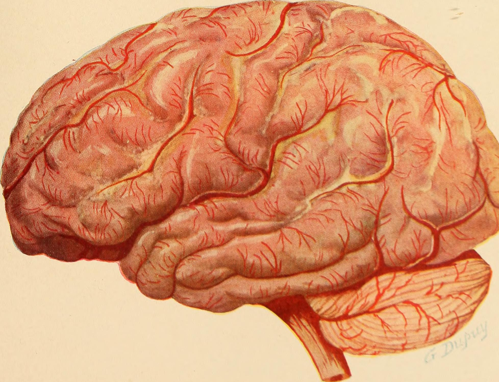 Addiction is a brain disease, The Recover
