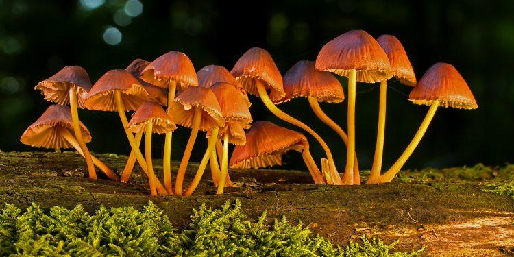 denver legalizes mushrooms