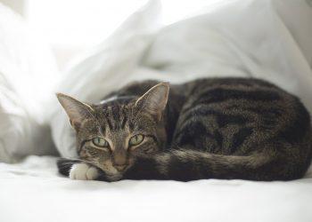 pets in drug rehab