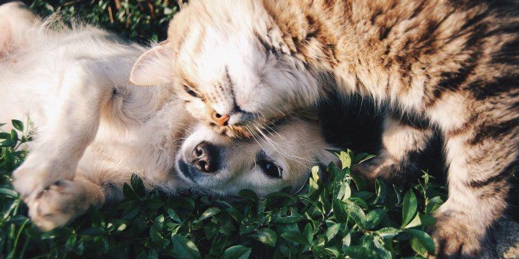pet friendly rehab