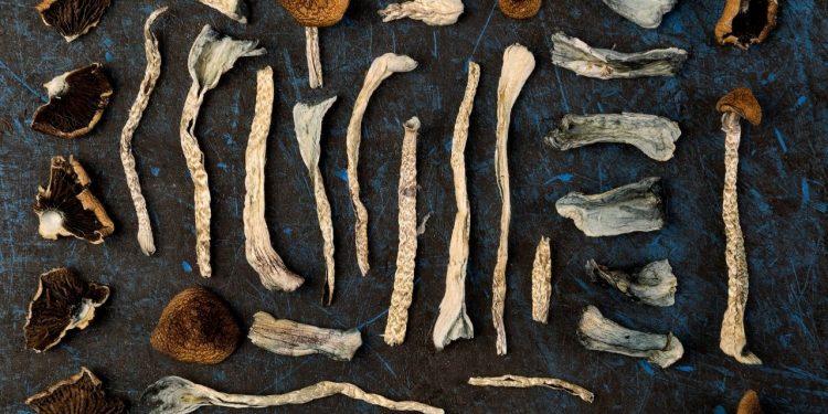 Magic mushrooms for treatment