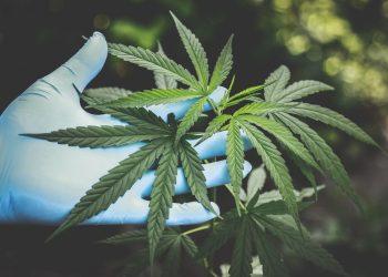 cannabisrecover